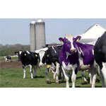 Why is your MSP boring? Become a Purple Cow!